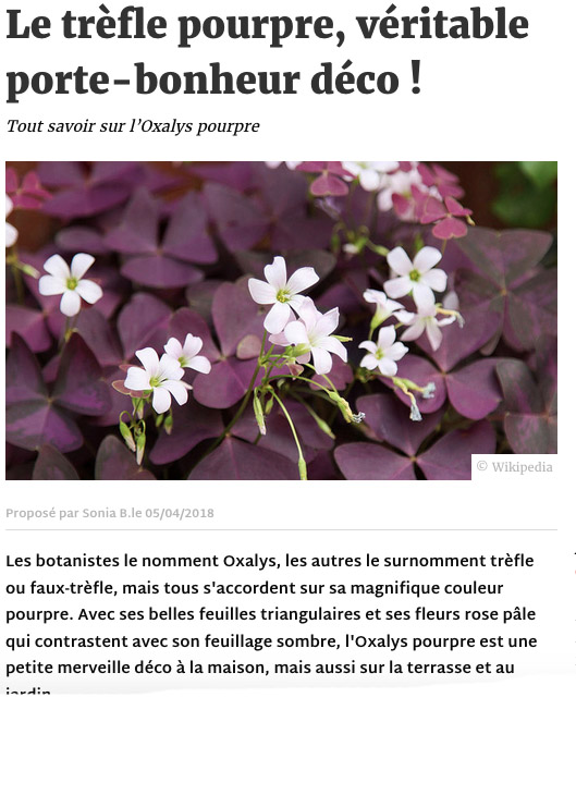 Article Deco.fr trefle pourpre - communication éditoriale production de contenus